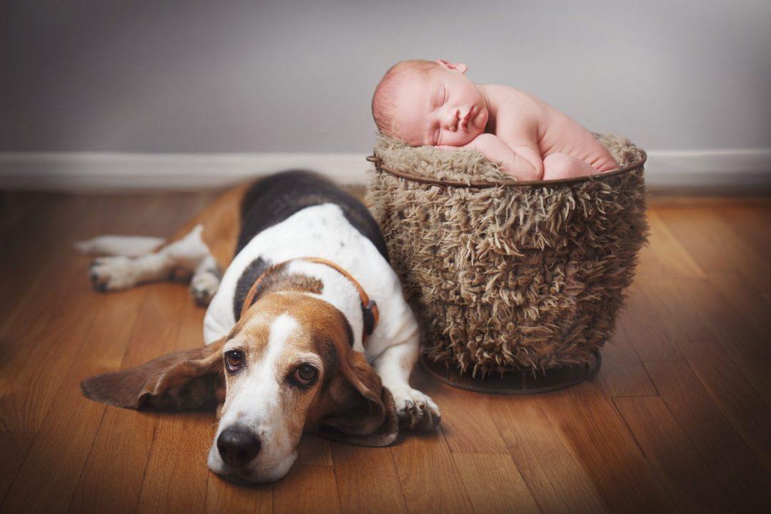 newborn in basket with dog