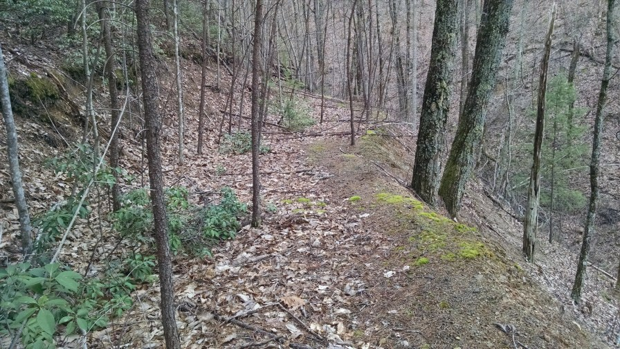 I found an old logging road. Or maybe a road that was used for construction of the (few) houses up here.