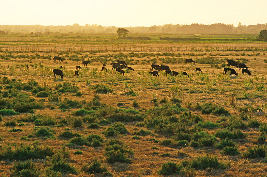 La Camargue, terre de migrations. ©Shellac