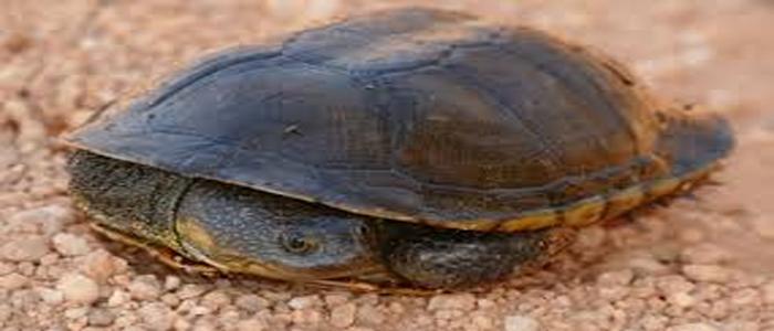Turtle-nesting-beach