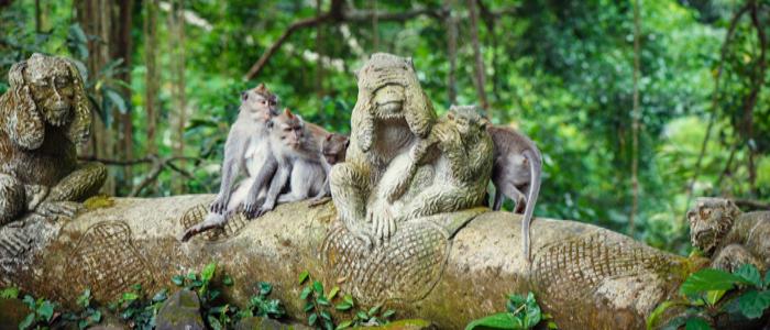 things to do in Ubud and Nusa Dua - Ubud monkey forest