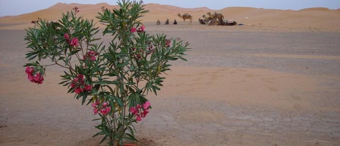 best Sahara Desert experiences: desert wildlife