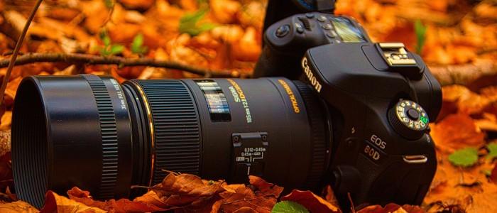 good wildlife photography camera