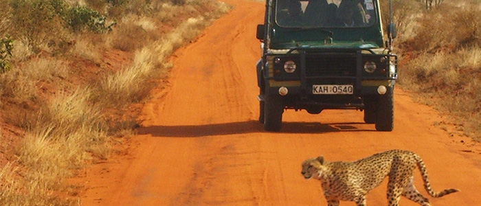 Destinations For Solo Travellers - Africa