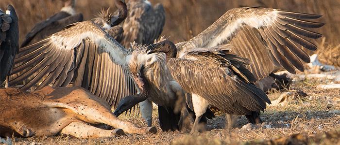 Cambodia wildlife