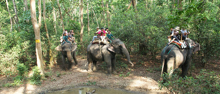 Things to do in Nepal - Chitwan National Park