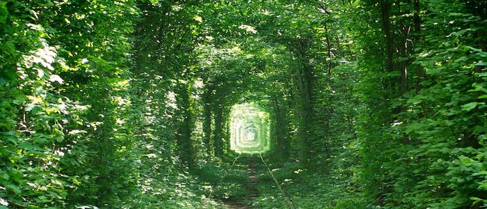 Things to do in Ukraine - Tunnel of Love