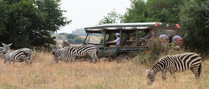 Things To Do In Kenya - Safari Tour