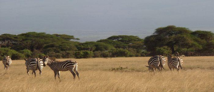 Africa Safari, Kenya