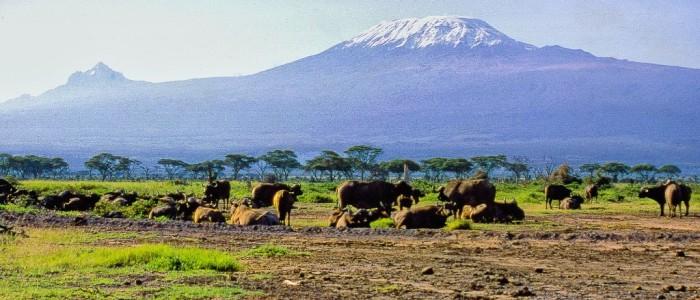 Mount Kenya National Park Safari