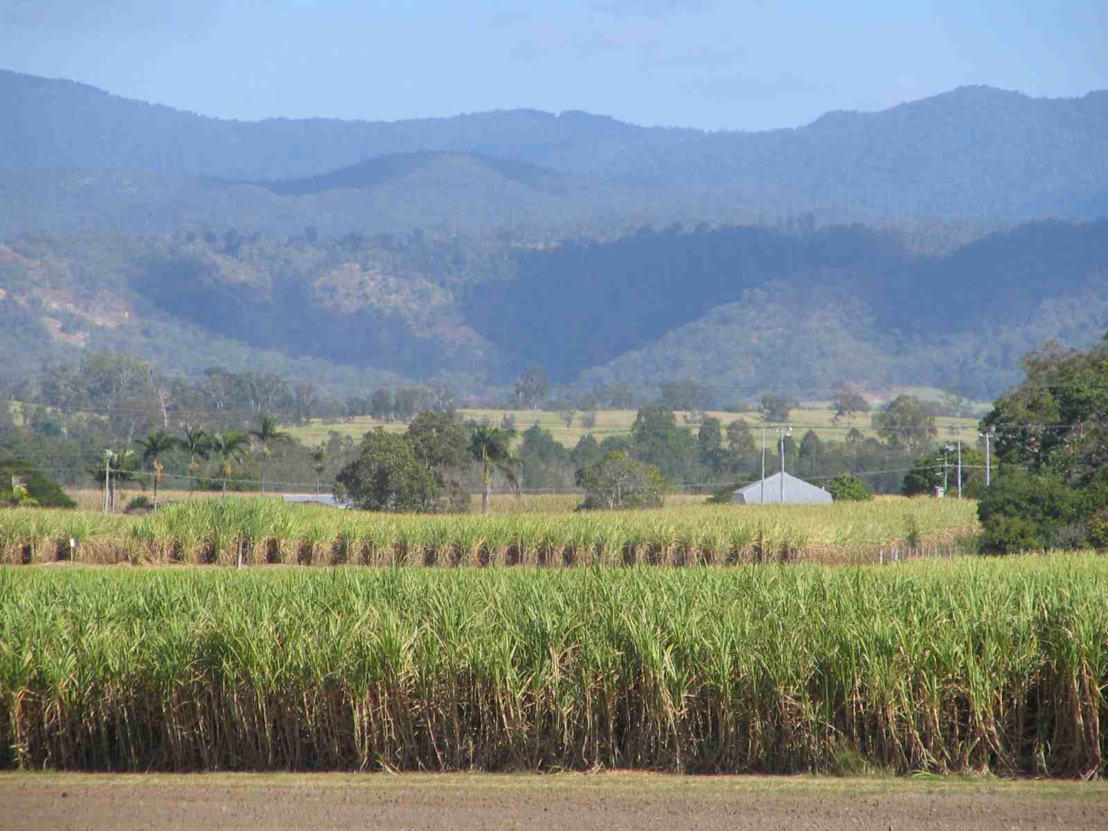 Sugar cane field oz RSLpix