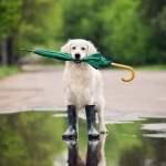regen-hund