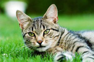 Pour des chats au chaud à Ahuntsic-Cartierville
