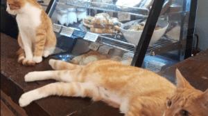 Retour des chats au Café Chato