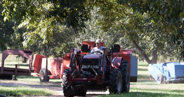 Chris Ivich prepares harvesting equipment for the upcoming pecan crop at Couch Orchard in Luther. (Photo by Brent Fuchs)