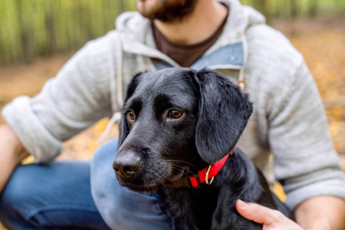 Psychological Benefits of Having Pets