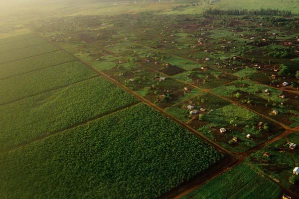 L'ANCAR recrute des conseillers agricoles et ruraux