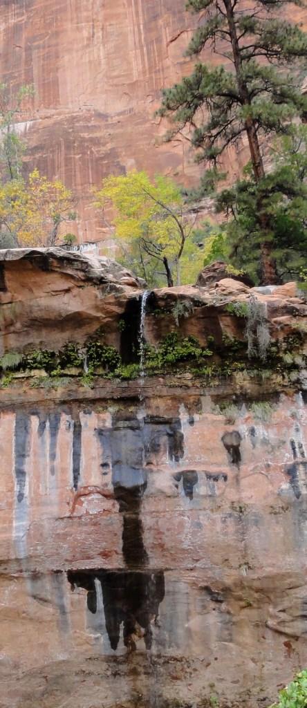 dsc02146-444x1024 Zion National Park: Majestic Cliffs