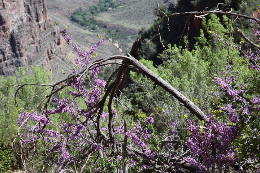 Flower-at-Bright-Angel-Trail.-Grand-Canyon-National-Park-for-blog-1024x682 Grand Canyon National Park: Grand in every way - depth, length, temperature extremes and crowds