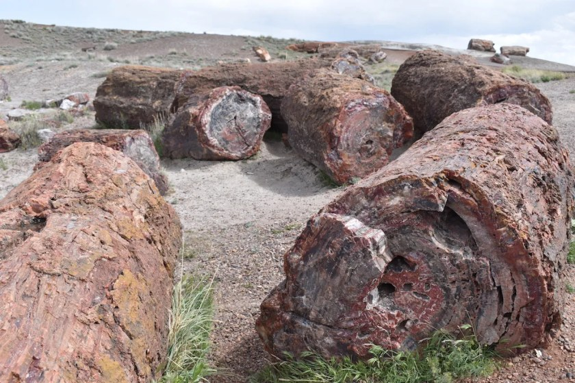 Petrified-Logs-for-Blog-1024x682 Petrified Forest National Park: Wood to Stone