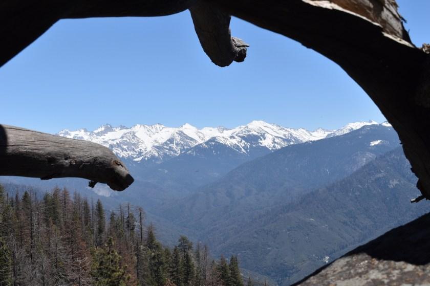 Blog-SSC_0590-1024x682 Sequoia National Park: Giants Standing Guard