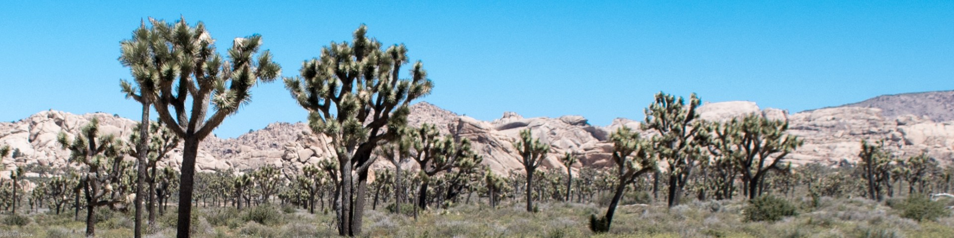 Joshua Tree National Park Featured Photo