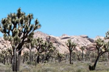 Joshua Tree National Park Featured Photo