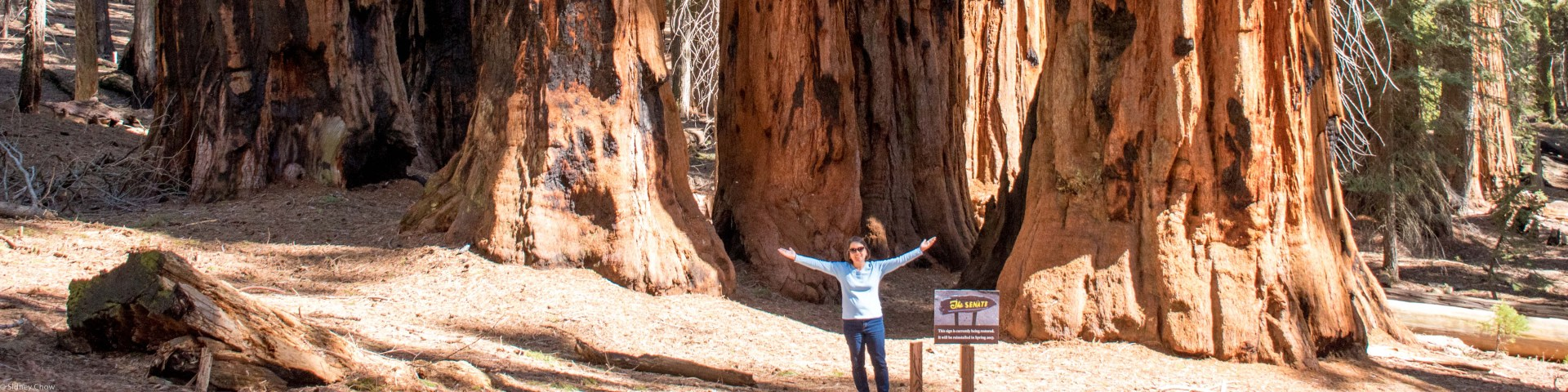 Sequoia National Park Featured Photo