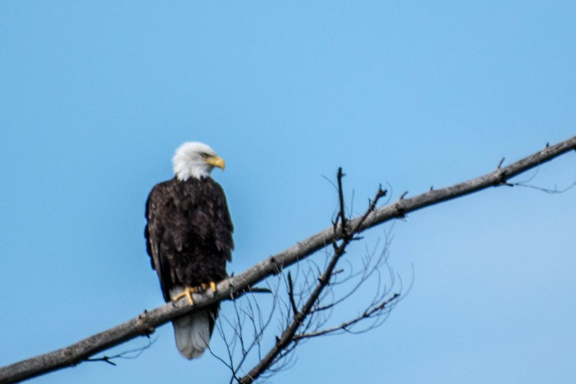 SSC_2678-1024x683 Voyageurs National Park: Lake Paradise