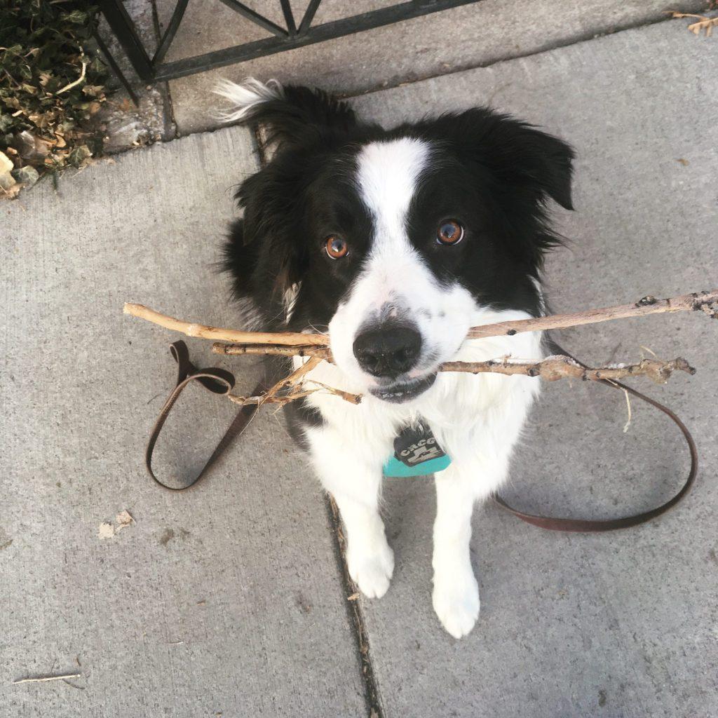 be more patient Barley loves sticks