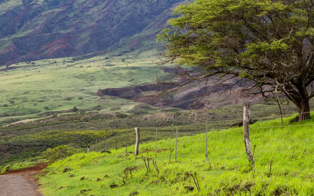 The Road from Hana ~ Taking the Road Less Traveled