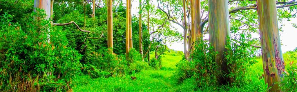 rainbow forest-4