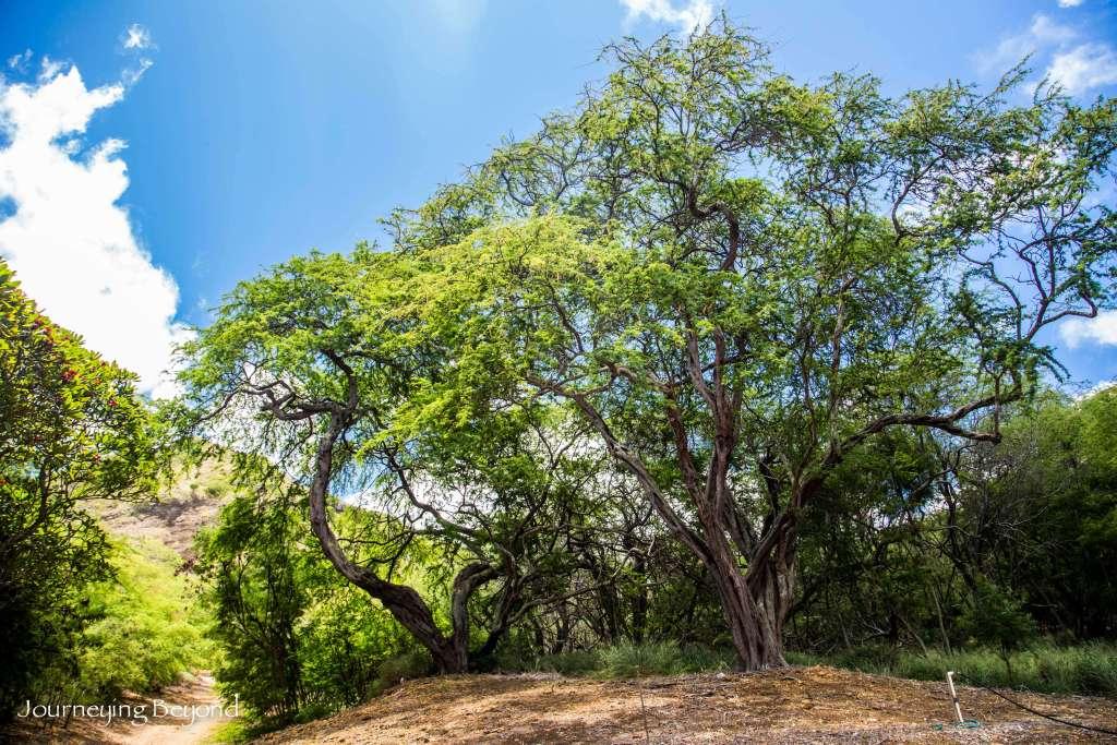 Koko Head Botanical Garden-9