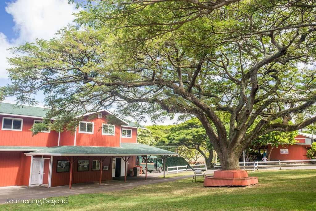 Kualoa Ranch-6