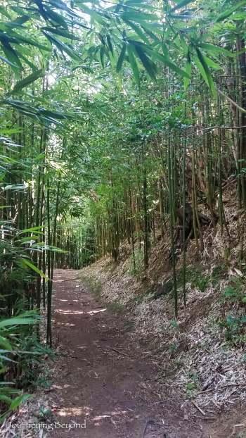 Hike Tantalus Oahu-9