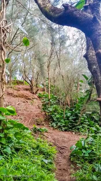 Pali Puka Trail-1