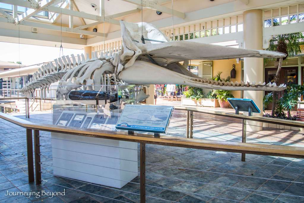 Whalers Village Museum-11