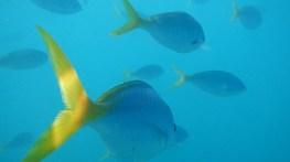 WHITSUNDAYS FISH