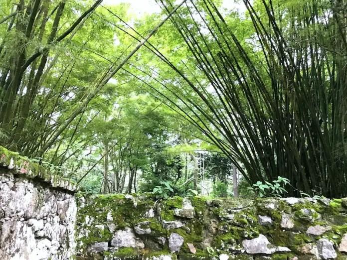 Botanical Garden rio