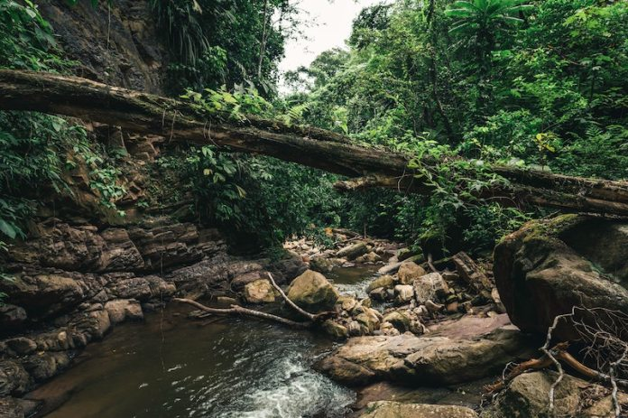 amazon rain forest tours