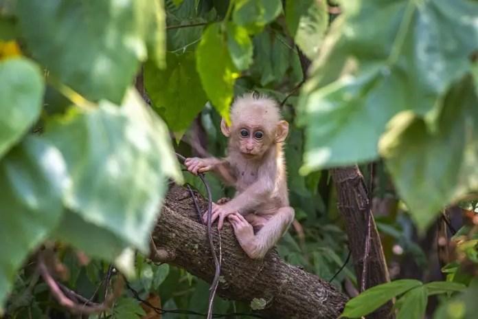baby monkey in tree