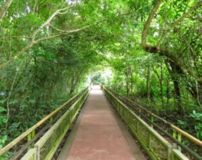 Trail path through Iguassu Falls Rainforest canopies