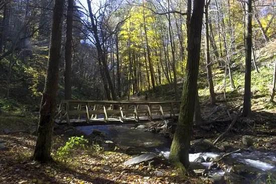 The wooden bridge over Dunnfield Creek