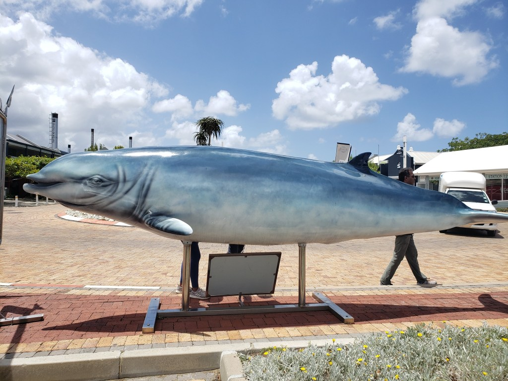 mounted whale replica