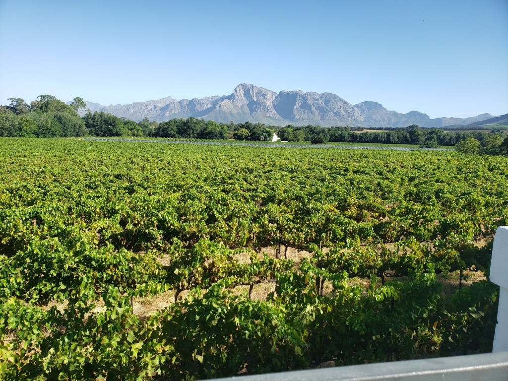 Vineyards at Vrede en Lust with solar panels and the mountains in the background