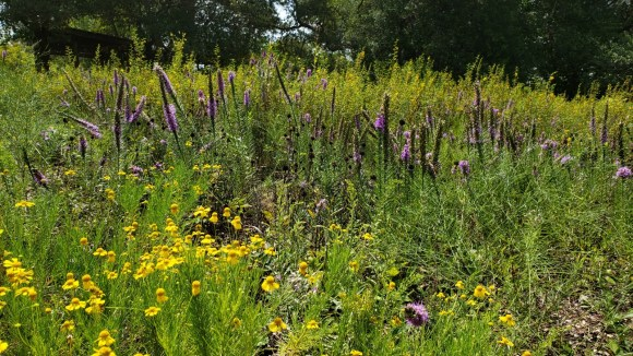 A profusion of colors at Hill Country Meadow Garden