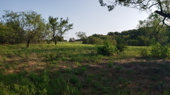 Meadow view along the Outer Loop Trail