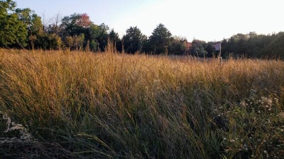 Prairie grass along our path