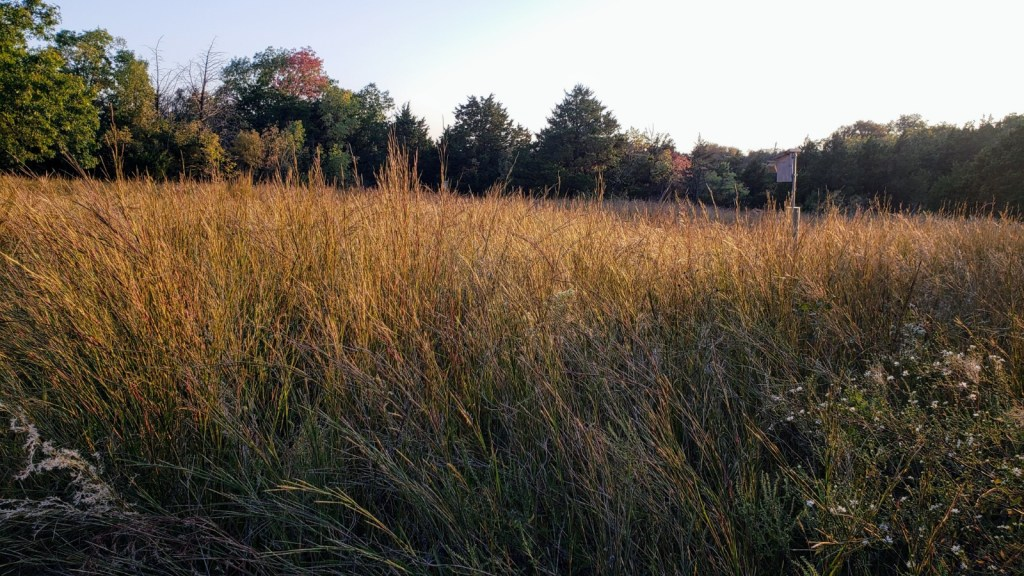 Prairie grass along our path