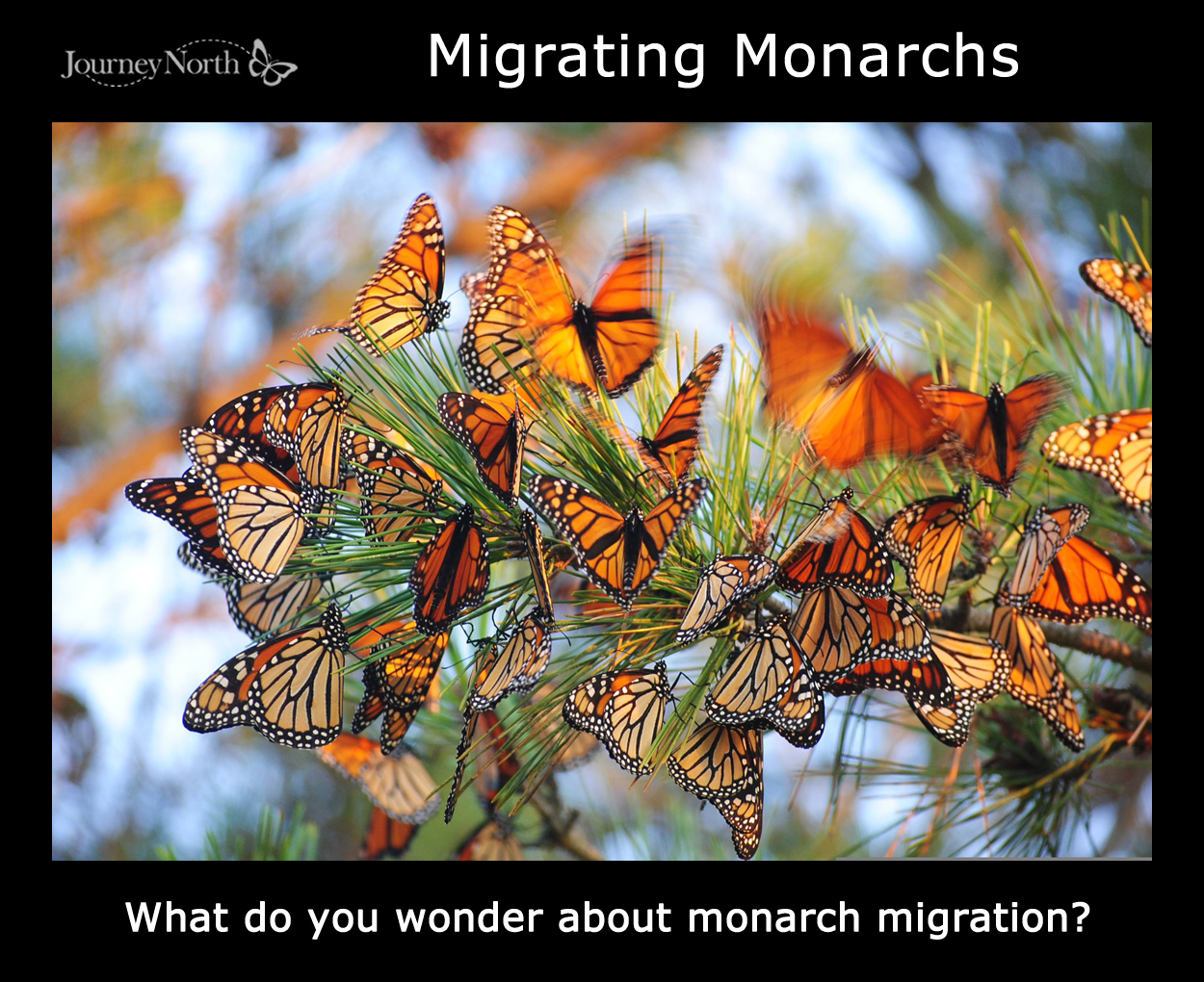Teaching Suggestions The Magic Of Monarch Butterfly Migration